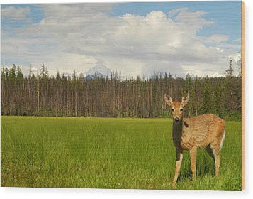 Curious Deer In Glacier National Park Wood Print by Larry Moloney