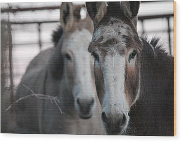 Curious Donkeys Wood Print by Lorri Crossno