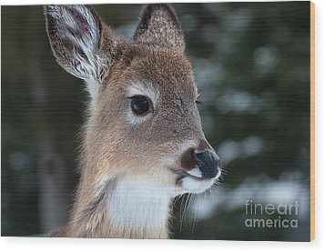 Wood Print featuring the photograph Curious Fawn by Bianca Nadeau