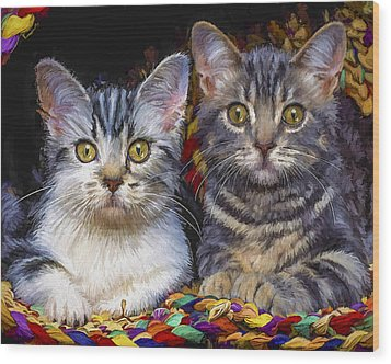 Curious Kitties Wood Print by David Wagner