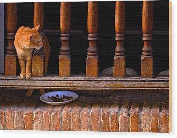 Curious Kitty Wood Print by Ricardo J Ruiz de Porras