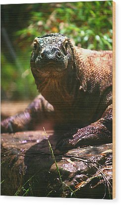 Curious Komodo Wood Print