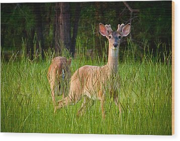 Curious Wood Print by Linda Unger
