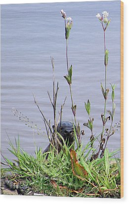 Wood Print featuring the photograph Curious Otter by I'ina Van Lawick