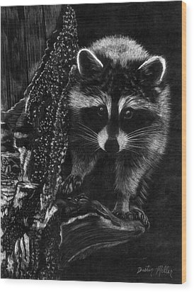 Curious Raccoon Wood Print by Dustin Miller