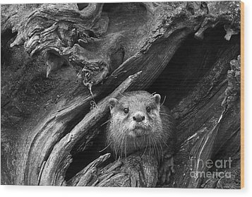 Wood Print featuring the photograph Curious River Otter by Inge Riis McDonald