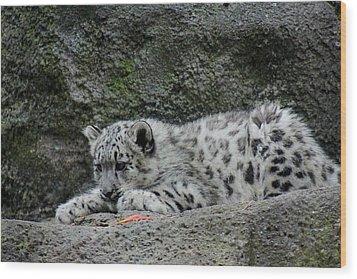 Curious Snow Leopard Cub Wood Print