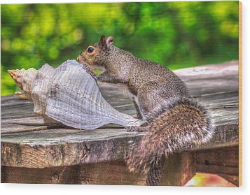 Wood Print featuring the photograph Curious Squirrel by Rob Sellers