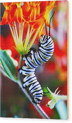Curly Caterpiller Wood Print by Betsy Straley