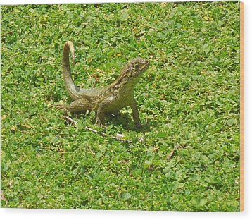 Curly-tailed Lizard Wood Print by Ron Davidson