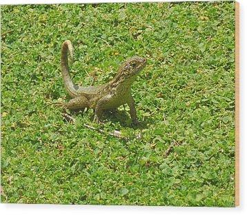 Curly-tailed Lizard Wood Print