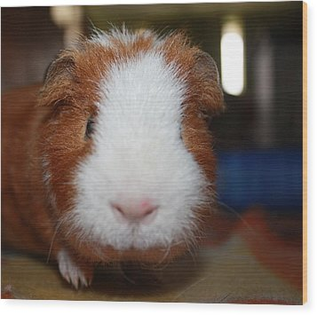 Curly The Guinea Pig Wood Print by Victoria Roehrig