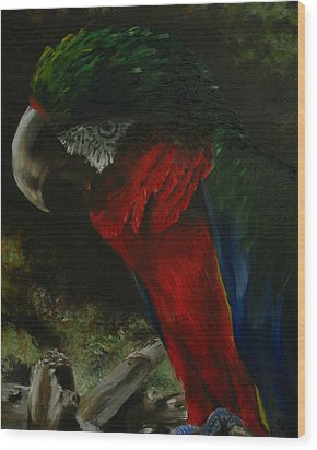 Curtis The Parrot Wood Print by Sherry Robinson