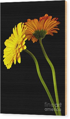 Curvaceous Daisies Wood Print