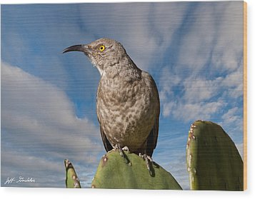 Curve-billed Thrasher On A Prickly Pear Cactus Wood Print by Jeff Goulden