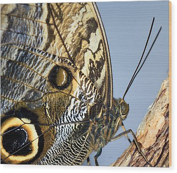 Curve Of A Butterfly Wood Print by Sonya Lang