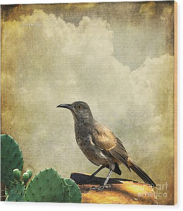 Curved Bill Thrasher Wood Print by Karen Slagle