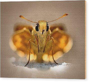 Wood Print featuring the painting Cute And Curious Brown Butterfly by Tracie Kaska