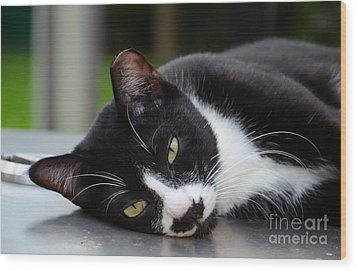 Cute Black And White Tuxedo Cat With Nipped Ear Rests  Wood Print by Imran Ahmed