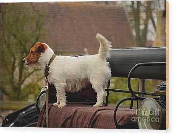 Cute Dog On Carriage Seat Bruges Belgium Wood Print by Imran Ahmed