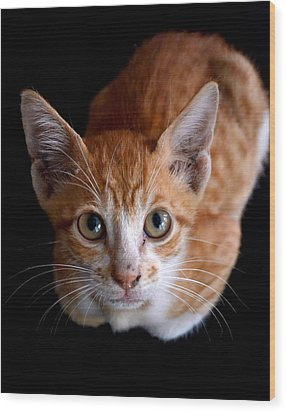 Cute Kitten Wood Print