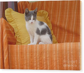 Wood Print featuring the photograph Cute Kitty by Vicki Spindler