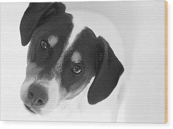 Cute Pose Jack Russell Terrier Wood Print by Natalie Kinnear