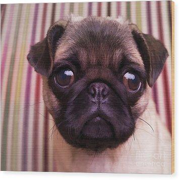 Cute Pug Puppy Wood Print by Edward Fielding