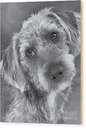 Cute Pup In Black And White Wood Print by Natalie Kinnear