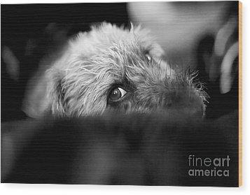 Cute Pup Sneek A Peek Wood Print by Natalie Kinnear
