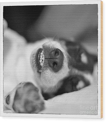 Cute Sleeping Jack Russell Terrier - Black And White Wood Print by Natalie Kinnear