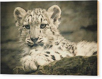 Cute Snow Cub Wood Print
