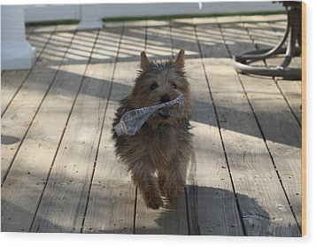 Cutest Dog Ever - Animal - 01134 Wood Print by DC Photographer