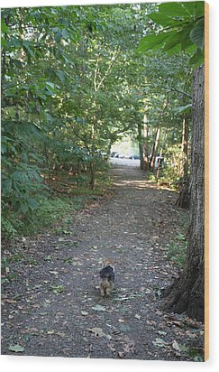 Cutest Dog Ever - Animal - 011352 Wood Print by DC Photographer