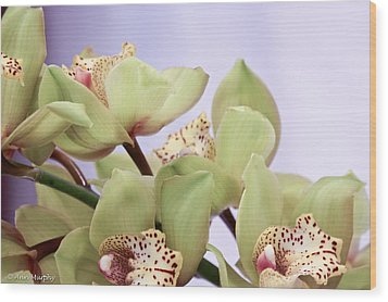 Cymbidium Orchids  Wood Print