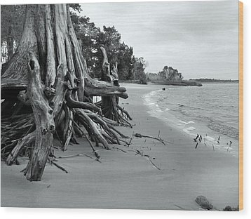 Cypress Bay Wood Print by Deborah Smith