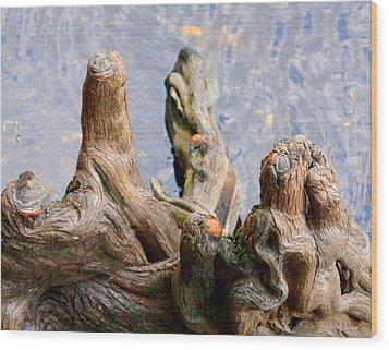 Cypress Domes Wood Print