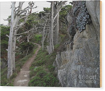 Cypress Grove Trail Wood Print