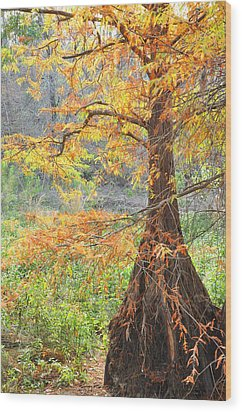 Cypress In Autumn Wood Print
