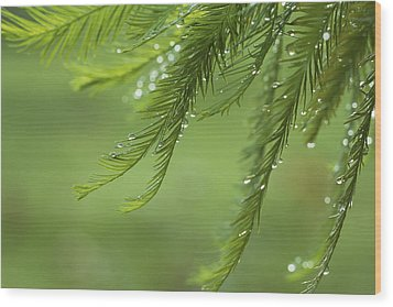 Wood Print featuring the photograph Cypress In The Mist - Art Print by Jane Eleanor Nicholas