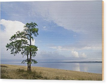 Wood Print featuring the photograph Cypress On The Neuse by Bob Decker