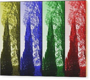 Cypress Wood Print by Rick Todaro