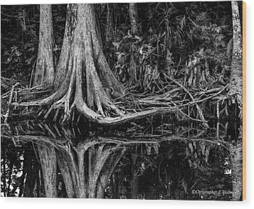 Cypress Roots - Bw Wood Print by Christopher Holmes