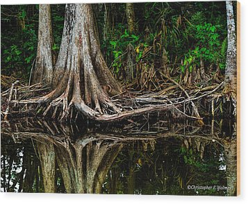 Cypress Roots Wood Print by Christopher Holmes