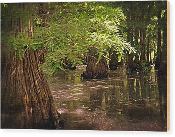 Cypress Swamp Wood Print by Marty Koch