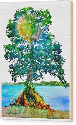 Da107 Cypress Tree Daniel Adams Wood Print