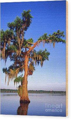 Cypress Tree Draped In Spanish Moss Wood Print by Thomas R Fletcher