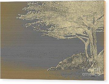 Cypress Tree On Beach Wood Print by Linda  Parker