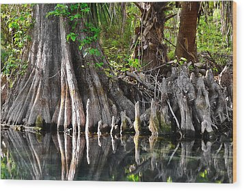 Cypress Trees - Nature's Relics Wood Print by Christine Till