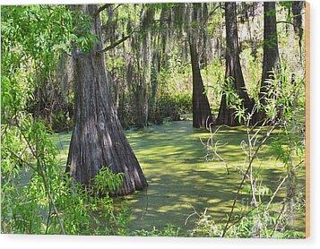 Cyprus Trees Wood Print by Patricia Greer